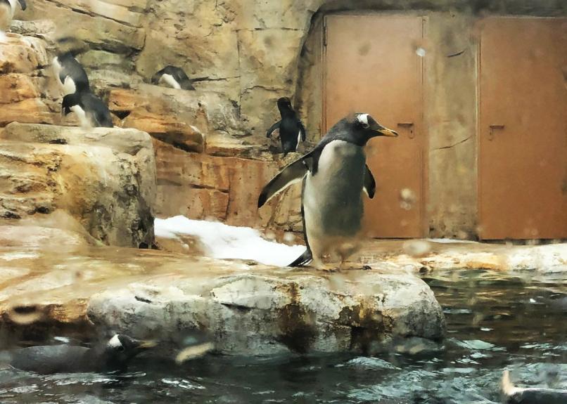Selwo Marina pinguinario de benalmadena