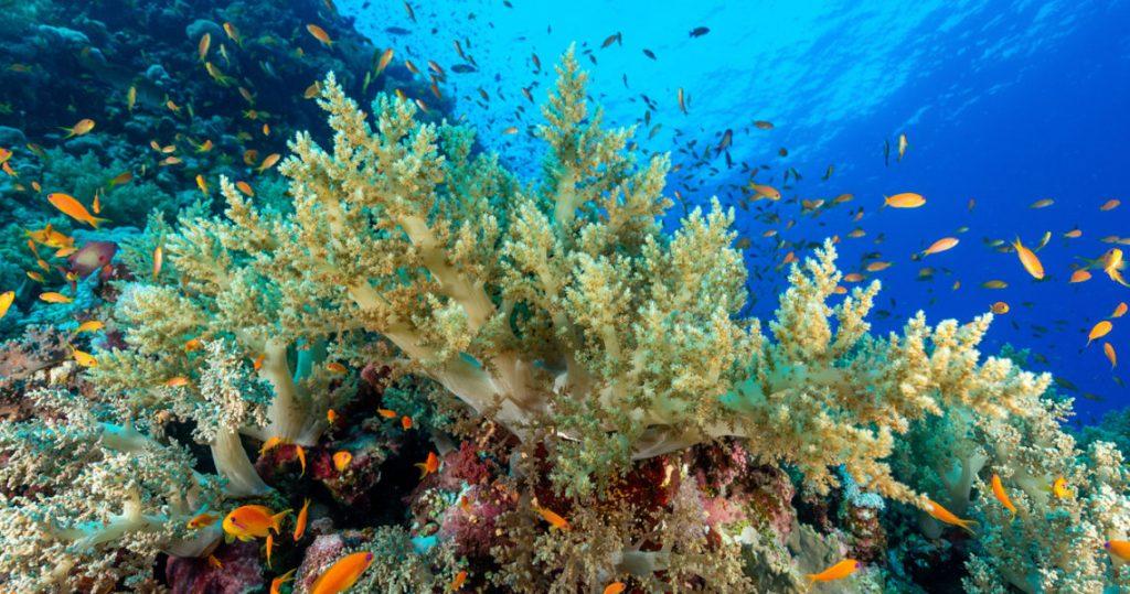 Corales sea life