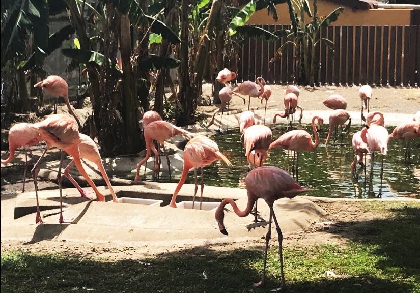 flamingos-de-selwo-marina